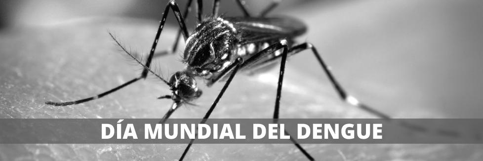 26 de Agosto – Día Mundial del Dengue